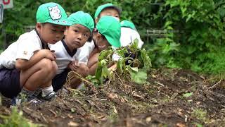道和幼稚園 お山で収穫.jpg